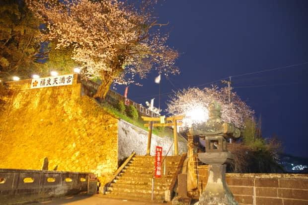 合格祈願と夜桜